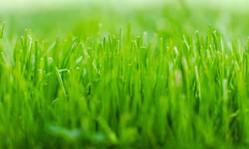 Lawn Service in Omaha NE Lawn Care in Omaha NE Lawn Mowing in Omaha NE Lawn Professionals in Omaha NE