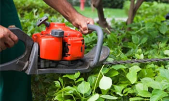 Shrub Removal in Omaha NE Shrub Removal Services in Omaha NE Shrub Care in Omaha NE Landscaping in Omaha NE