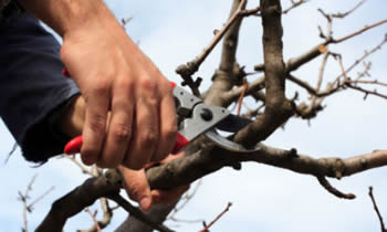 Tree Pruning in Omaha NE Tree Pruning Services in Omaha NE Quality Tree Pruning in Omaha NE