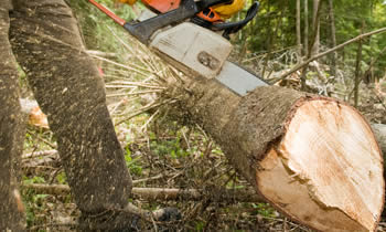 Tree Service in Omaha NE Tree Service Estimates in Omaha NE Tree Service Quotes in Omaha NE Tree Service Professionals in Omaha NE