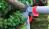 Tree Pruning Services in Omaha NE